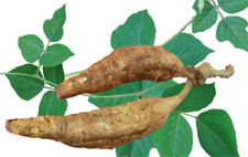 葛根粉的作用与功效 如何食用葛根粉