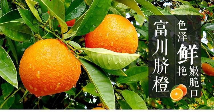 """富川县携手团区委电商平台打造""""富川""""脐橙品牌"""